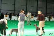 XVII. Mezinárodní výstava psů PRAHA 2009 č.188