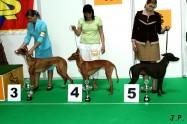 XVII. Mezinárodní výstava psů PRAHA 2009 č.189
