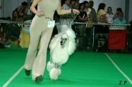 XVII. Mezinárodní výstava psů PRAHA 2009 č.193