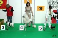 XVII. Mezinárodní výstava psů PRAHA 2009 č.194