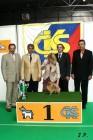 XVII. Mezinárodní výstava psů PRAHA 2009 č.197