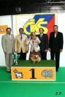 XVII. Mezinárodní výstava psů PRAHA 2009 č.198