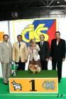XVII. Mezinárodní výstava psů PRAHA 2009 č.199