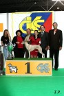 XVII. Mezinárodní výstava psů PRAHA 2009 č.201
