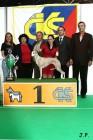 XVII. Mezinárodní výstava psů PRAHA 2009 č.202