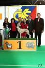 XVII. Mezinárodní výstava psů PRAHA 2009 č.203