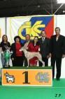 XVII. Mezinárodní výstava psů PRAHA 2009 č.205
