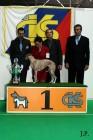 XVII. Mezinárodní výstava psů PRAHA 2009 č.206