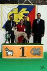 XVII. Mezinárodní výstava psů PRAHA 2009 č.207