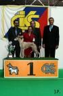 XVII. Mezinárodní výstava psů PRAHA 2009 č.208