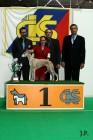 XVII. Mezinárodní výstava psů PRAHA 2009 č.209