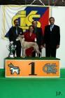 XVII. Mezinárodní výstava psů PRAHA 2009 č.210