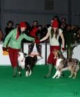 XVIII. Mezinárodní výstava psů PRAHA 2009 fotogalerie