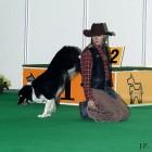 XVIII. Mezinárodní výstava psů PRAHA 2009 fotogalerie č.5