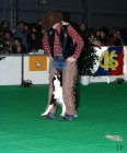 XVIII. Mezinárodní výstava psů PRAHA 2009 fotogalerie č.9