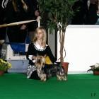 XVIII. Mezinárodní výstava psů PRAHA 2009 fotogalerie č.14