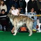 XVIII. Mezinárodní výstava psů PRAHA 2009 fotogalerie č.15