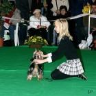 XVIII. Mezinárodní výstava psů PRAHA 2009 fotogalerie č.16