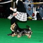 XVIII. Mezinárodní výstava psů PRAHA 2009 fotogalerie č.17