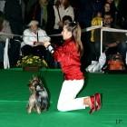 XVIII. Mezinárodní výstava psů PRAHA 2009 fotogalerie č.18