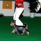 XVIII. Mezinárodní výstava psů PRAHA 2009 fotogalerie č.19