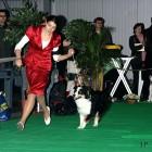 XVIII. Mezinárodní výstava psů PRAHA 2009 fotogalerie č.24