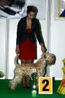 XVIII. Mezinárodní výstava psů PRAHA 2009 fotogalerie č.26