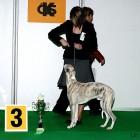 XVIII. Mezinárodní výstava psů PRAHA 2009 fotogalerie č.27