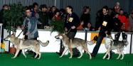 XVIII. Mezinárodní výstava psů PRAHA 2009 fotogalerie č.28