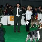 XVIII. Mezinárodní výstava psů PRAHA 2009 fotogalerie č.29