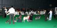 XVIII. Mezinárodní výstava psů PRAHA 2009 fotogalerie č.30