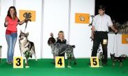 XVIII. Mezinárodní výstava psů PRAHA 2009 fotogalerie č.35