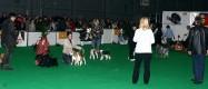 XVIII. Mezinárodní výstava psů PRAHA 2009 fotogalerie č.38