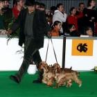 XVIII. Mezinárodní výstava psů PRAHA 2009 fotogalerie č.39