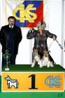XVIII. Mezinárodní výstava psů PRAHA 2009 fotogalerie č.40