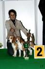 XVIII. Mezinárodní výstava psů PRAHA 2009 fotogalerie č.41