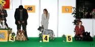 XVIII. Mezinárodní výstava psů PRAHA 2009 fotogalerie č.42