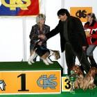 XVIII. Mezinárodní výstava psů PRAHA 2009 fotogalerie č.43