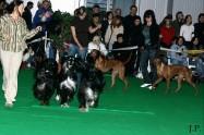 XVIII. Mezinárodní výstava psů PRAHA 2009 fotogalerie č.44