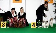 XVIII. Mezinárodní výstava psů PRAHA 2009 fotogalerie č.47