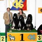 XVIII. Mezinárodní výstava psů PRAHA 2009 fotogalerie č.49