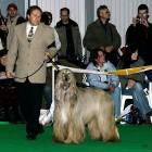XVIII. Mezinárodní výstava psů PRAHA 2009 fotogalerie č.50