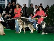 XVIII. Mezinárodní výstava psů PRAHA 2009 fotogalerie č.51