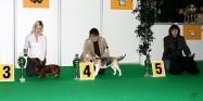XVIII. Mezinárodní výstava psů PRAHA 2009 fotogalerie č.53