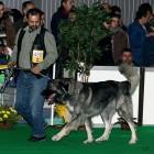 XVIII. Mezinárodní výstava psů PRAHA 2009 fotogalerie č.55
