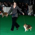 XVIII. Mezinárodní výstava psů PRAHA 2009 fotogalerie č.58