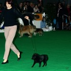 XVIII. Mezinárodní výstava psů PRAHA 2009 fotogalerie č.59