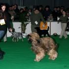 XVIII. Mezinárodní výstava psů PRAHA 2009 fotogalerie č.60
