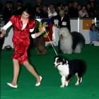 XVIII. Mezinárodní výstava psů PRAHA 2009 fotogalerie č.61