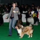 XVIII. Mezinárodní výstava psů PRAHA 2009 fotogalerie č.62